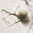Citromfüves szappanvirág
