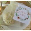 Körömvirágos szappanvirág