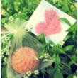 Rózsafaolajos szappanvirág